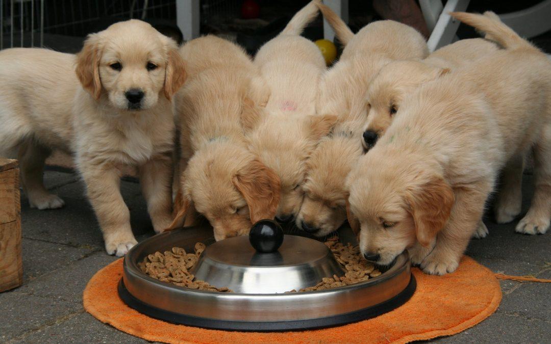 Functional Food Ingredients in Canine Pet Foods